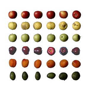 Fruit dataset